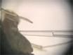 Testen der physiologische Barrieren für die virale Transmission in Blattläuse mit Mikroinjektion thumbnail