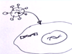 Molekulare Evolution der Tre-Rekombinase thumbnail